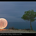 Ball of Light Greets the Solitary Mediterranean Pine by SVA1969