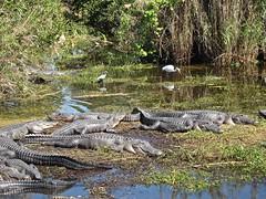 EvergladesNP - 21