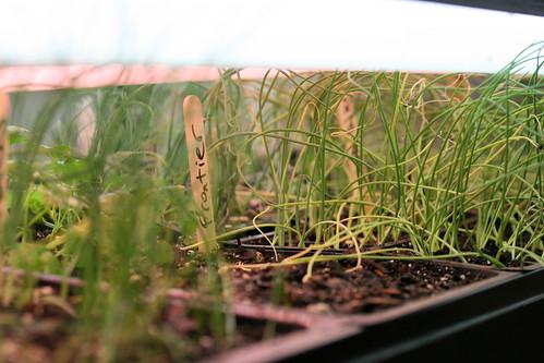 seedlings 001