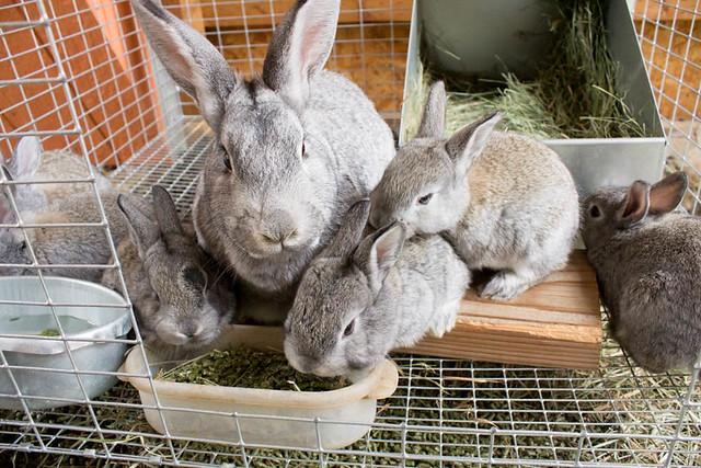 baby bunnies7 (1 of 1)
