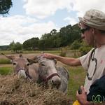 Dan Pets a Donkey - Raglan, New Zealand
