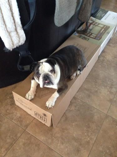 Sophie's box
