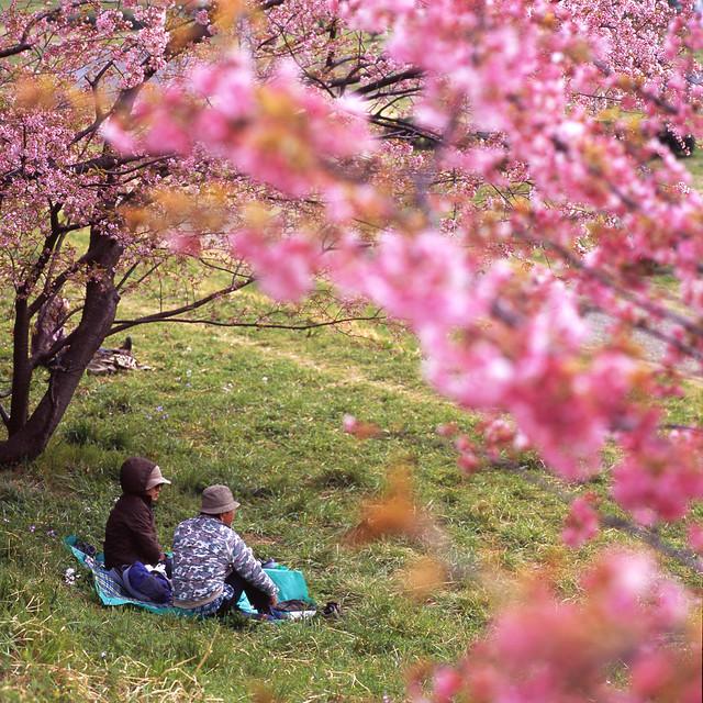 早春の濃色