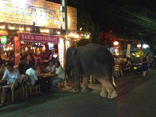 An elephant walks into a bar...