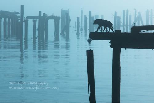 Fog Dog San Francisco
