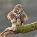 Featheration by birdtracker