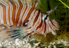 guppiecat posted a photo: