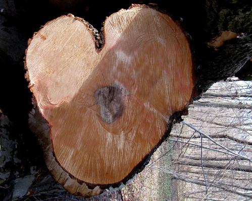 Baum-Herz 2 (habe ich geschönt und gedreht)