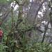 In Red Panda territory! (Hem Sagar Baral)