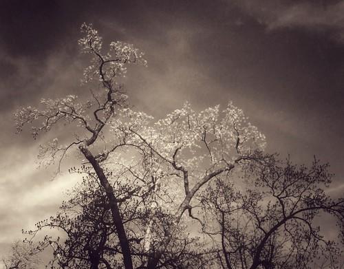 tree nature leaves landscape washingtondc dc mobilephotography emilyreid iphone5 iphoneography