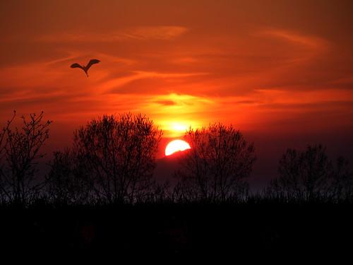 trees sunset italy mountains nature landscape countryside italia country friuli fagagna oasideiquadris feagne