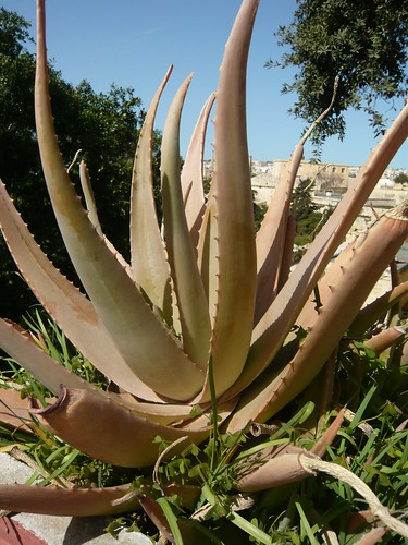 Plants of Malta  march