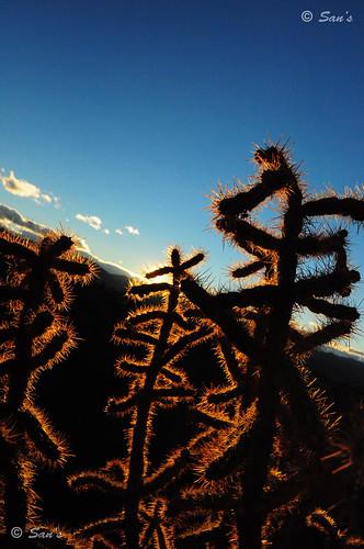 cactus twilight colorado dusk royalgorge