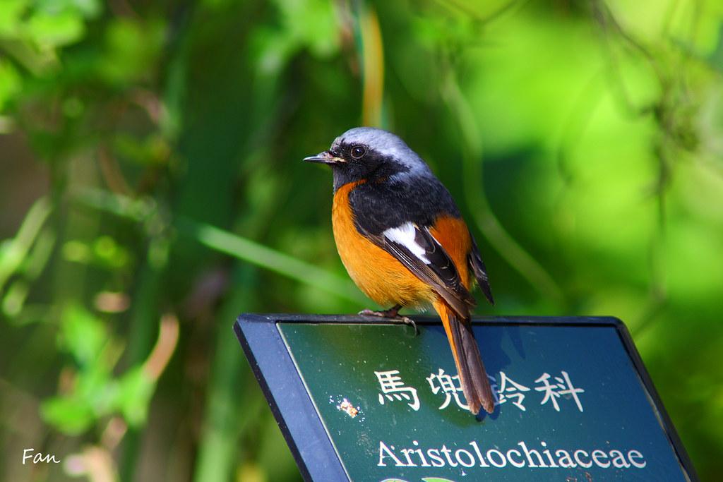 我的休閒生活 台北植物園驚奇4鳥兒 9張照