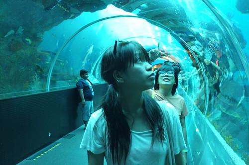 at SEA Aquarium