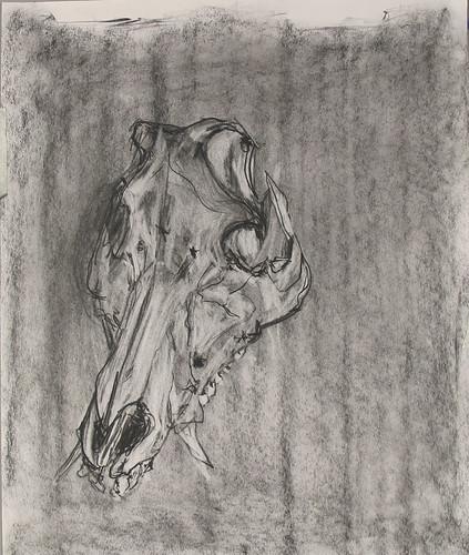 jadieskull