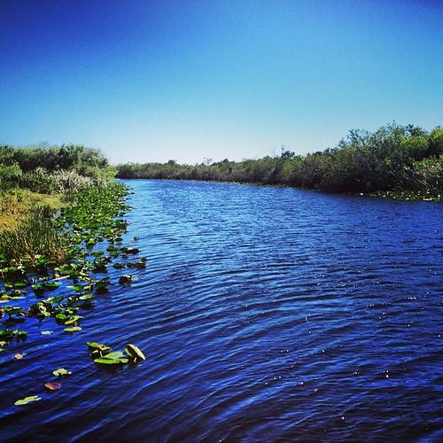 River of Grass #everglades #florida #igersftl