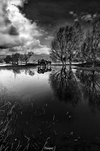 china bw horse cloud tree pool photoshop pentax drink yunnan lijiang lashihai k20d