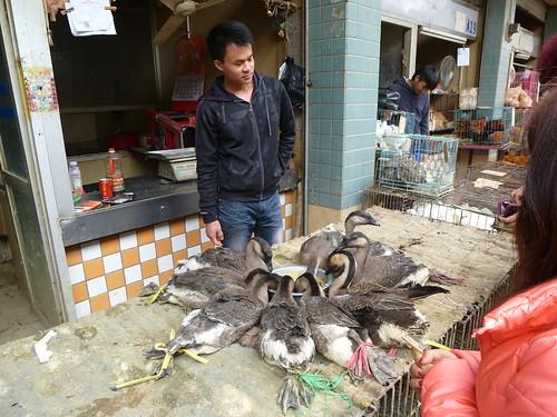 Guangdond-Guangzhou-Auberge-Quartier (27)