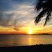 Small photo of Miami Tease