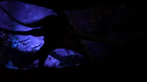 Spooky Octopus