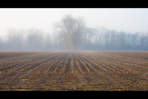 mist sunrise dawn farm crops agriculture slough berkshire kevday stubble langleypark langleycountrypark