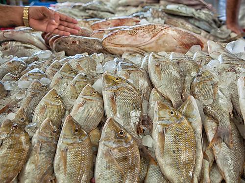Dubai Fish Market #02