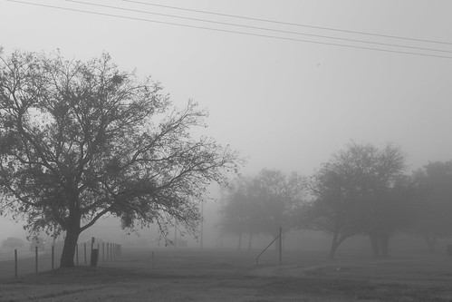 Foggy day - college station