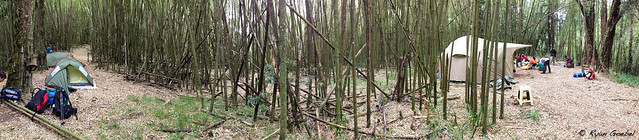 Giant Bamboo Camp Panorama