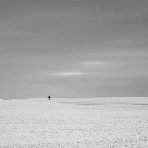 longexposure winter blackandwhite square landscape denmark vinter dänemark danmark aalborg lonelytree snowscape landskab 500x500 nikkor50mmf18d bwnd110 ensomttræ