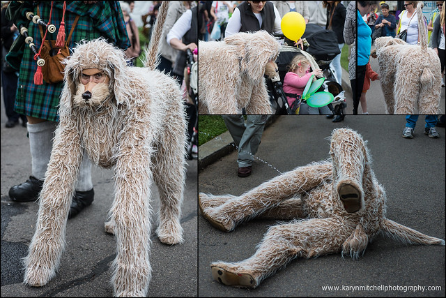 Pictures Of Large Furry Dogs