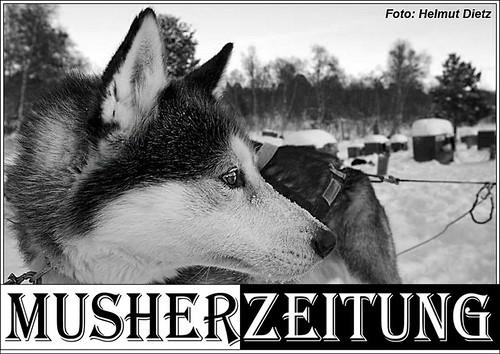 Husky-Zwinger, Schlittenhundezwinger, Norwegen