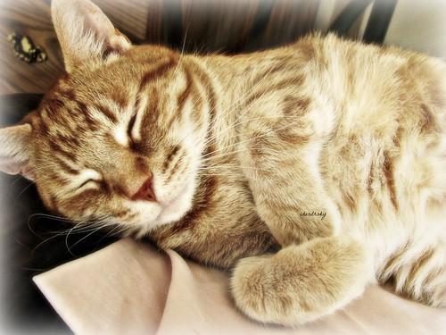 cat nap by cherithsky