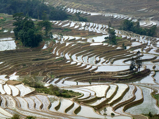 """Rice paddy in Yuanyang, China"""