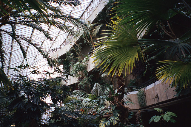Barbican Conservatory - hans down my favourite place in London