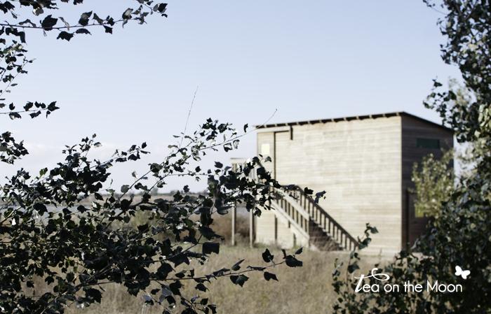Estany d'Ivars novembre 2012-223