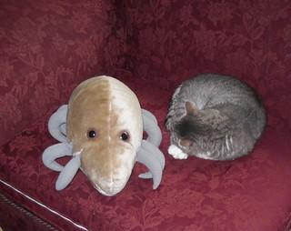 Dust Mite & Cat (1)