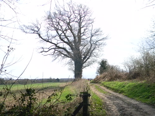 Trees, Greensand Way