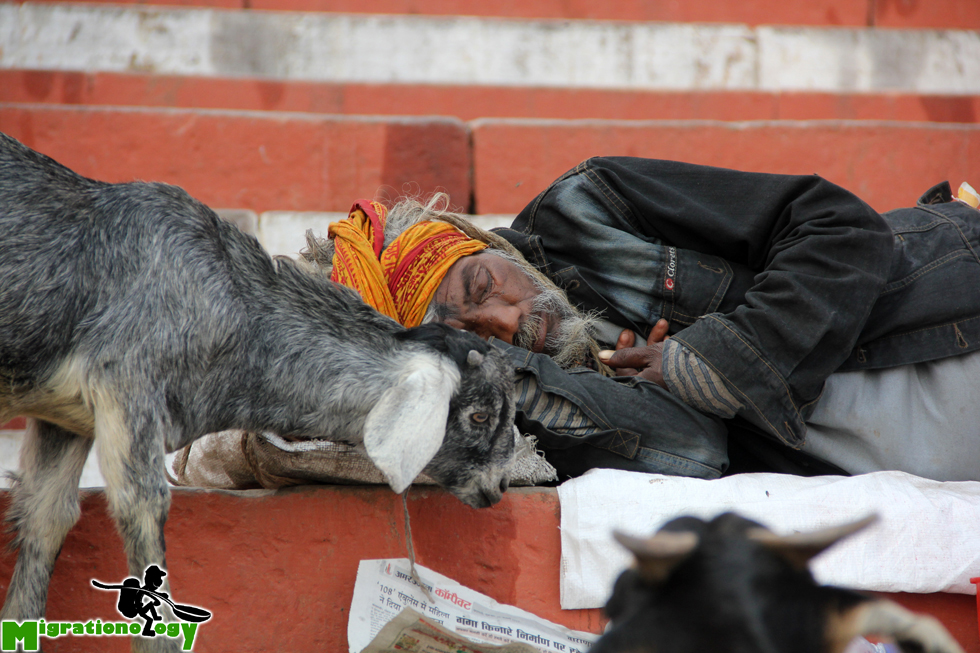 Kissed by a goat!