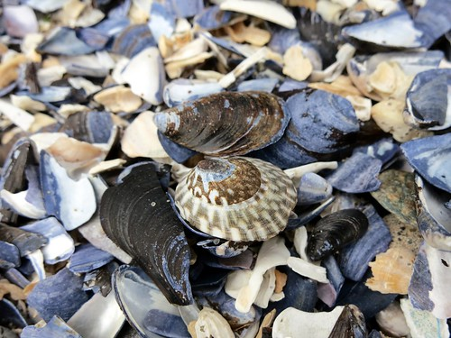 I saw seashells on the seashore