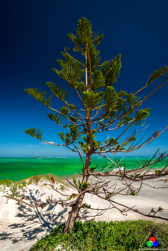 Withered norfolk pine and the indian ocean, Western Australia by Douglas Remington - Ethereal Light® Photography