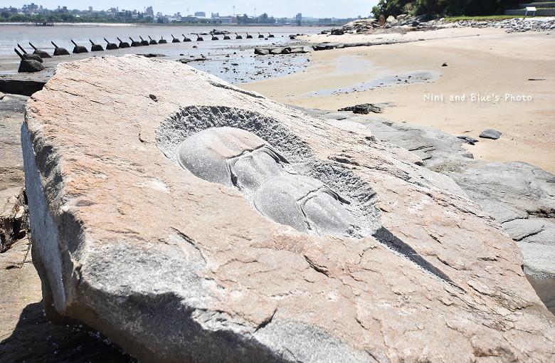 金門旅遊景點住宿建功嶼活化石鱟復育地19
