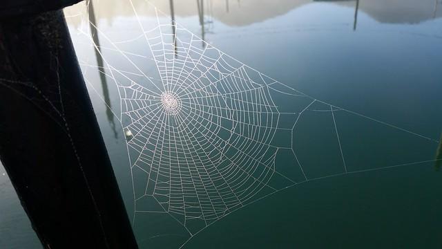 grid web