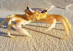 #sonevafushi #maldives #crab #closeup #galaxynote7