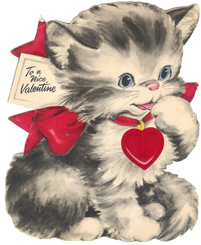 to a nice valentine cat