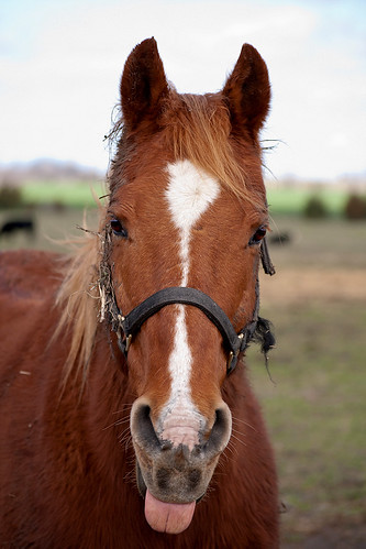 Red the Sorrel Horse