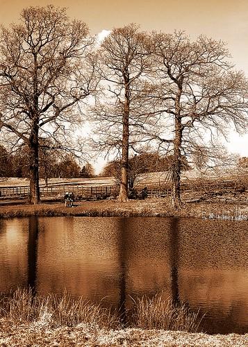 Hardwick Park 3 sepia by birbee