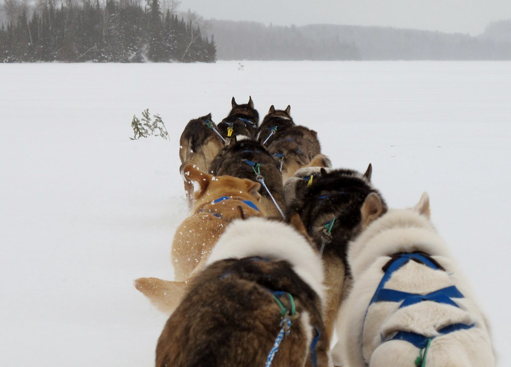 Dog sledding - Gunflint Trail, Minnesota