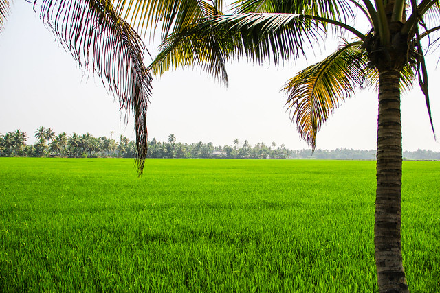 Kuttanad pic (1 of 1)