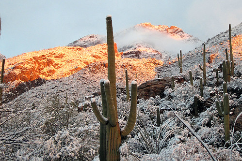 arizona snow tucson